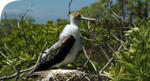 Kiritimati birdlife